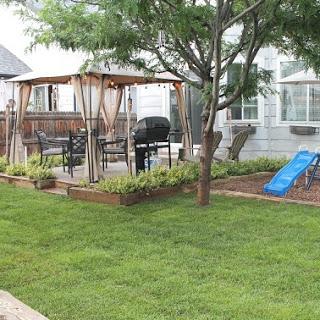 Wild Backyard Progress